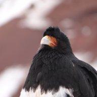 ManoBird